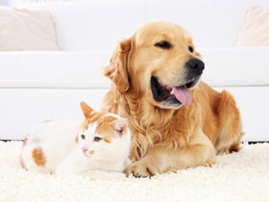 Pet Odour Treatment